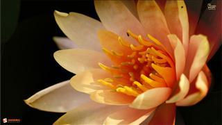 bienvenue 7599-fleur-jaune